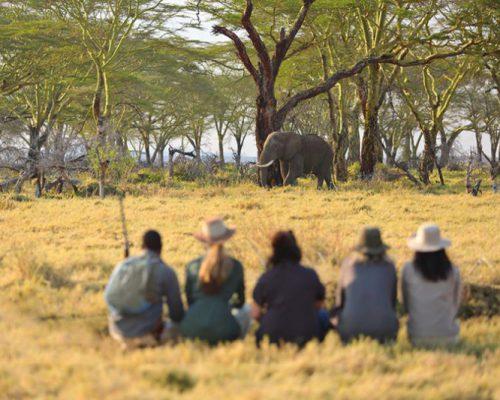 Namiri-Plains-Walking-with-Elephant